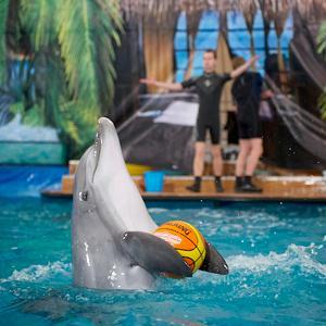 Дельфинарии, океанариумы Кисловодска