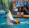Дельфинарии, океанариумы в Кисловодске