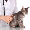 Ветеринарные клиники в Кисловодске